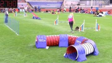 Agility-SM2016, Individuell Small agility
